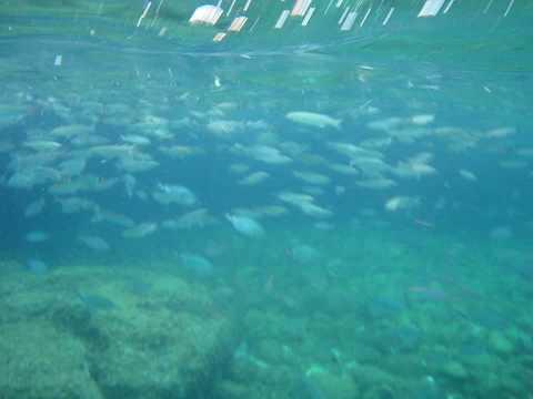 Prijava na web mjesto za pronalazak riba